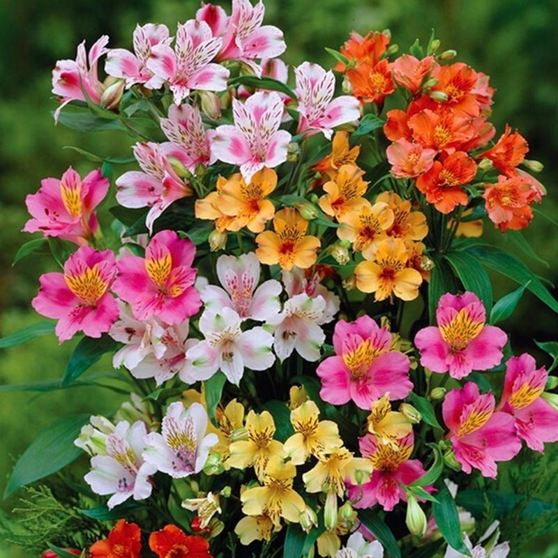 Rainbow Ridge Floral Wholesale | florist | 165 Eastman Ave, Strathroy, ON N7G 3J9, Canada | 5192469816 OR +1 519-246-9816