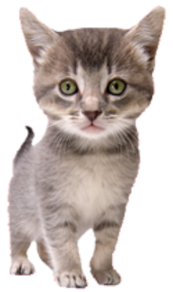 Allwest Animal Hospital | veterinary care | 2526 Yale Ct, Abbotsford, BC V2S 8G9, Canada | 6048709333 OR +1 604-870-9333