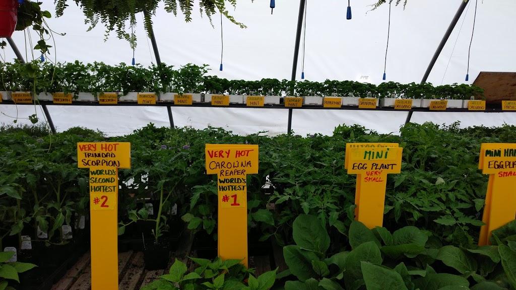 Roys Flower Palace - Seasonal greenhouse   home goods store   2726 Ottawa Regional Rd 11, Nepean, ON K2J 4S2, Canada