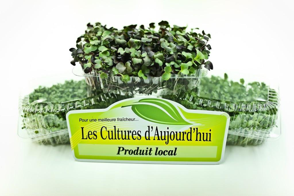 Les Cultures d'Aujourd'hui | point of interest | 171b Rue de la Station, Charette, QC G0X 1E0, Canada | 8199131555 OR +1 819-913-1555