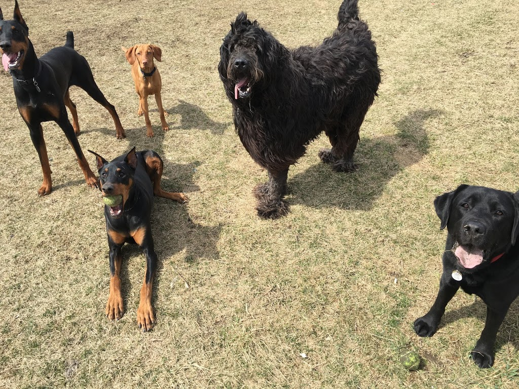 City Sniffers Dog Walking & Pet Services | park | 1248 The Queensway, Etobicoke, ON M8Z 1S2, Canada | 6473399957 OR +1 647-339-9957
