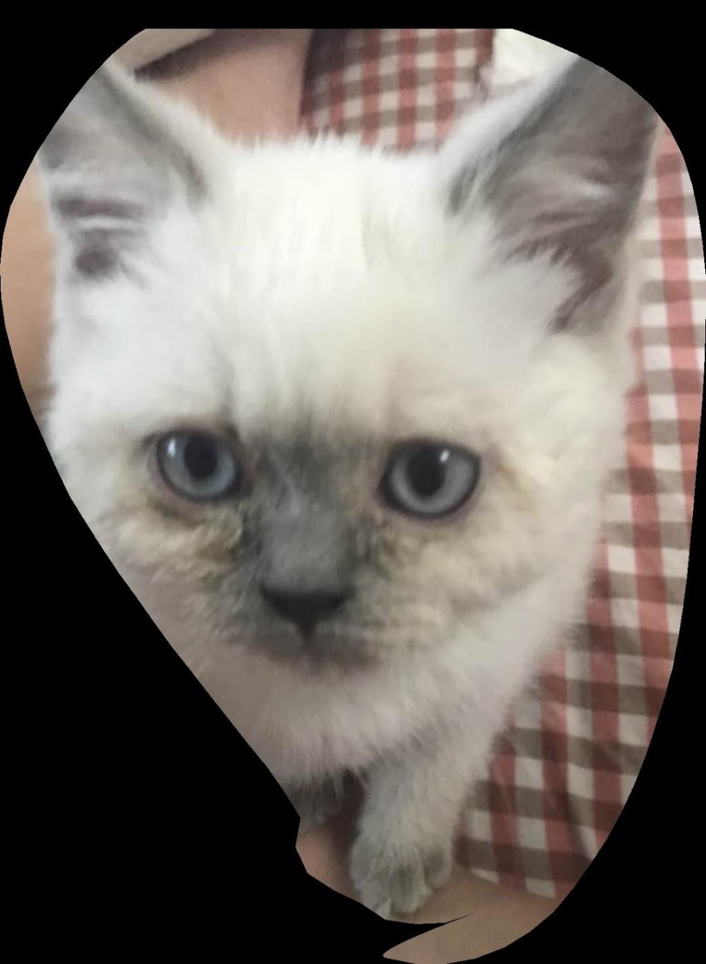 Ashcott Veterinary Clinic | veterinary care | 4915 Steeles Ave E, Scarborough, ON M1V 4Z4, Canada | 4167542837 OR +1 416-754-2837