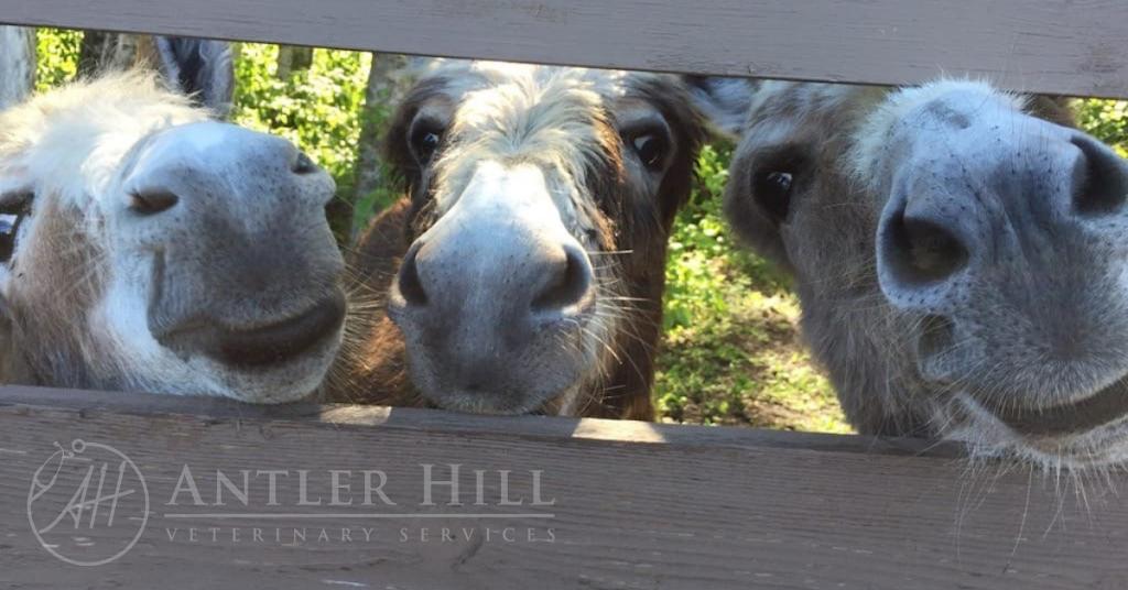 Antler Hill Veterinary Services | health | 9 Hawkridge Blvd #109, Penhold, AB T0M 1R0, Canada | 5878025111 OR +1 587-802-5111