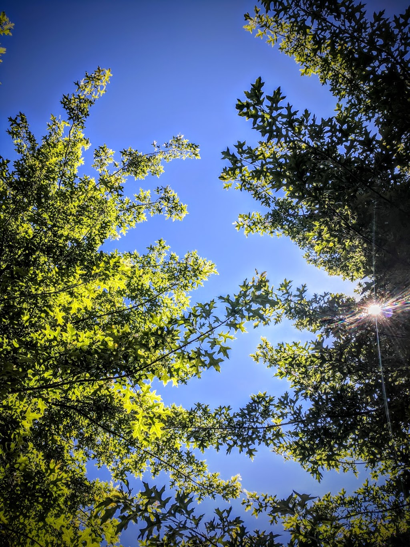 Country Hills Park | park | 1899 White Blossom Way, Nanaimo, BC V9X 1X5, Canada | 2507565200 OR +1 250-756-5200
