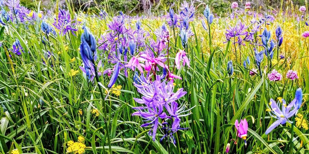 Lotus Pinnatus Park | park | Nanaimo, BC V9R 5P5, Canada | 2507145568 OR +1 250-714-5568