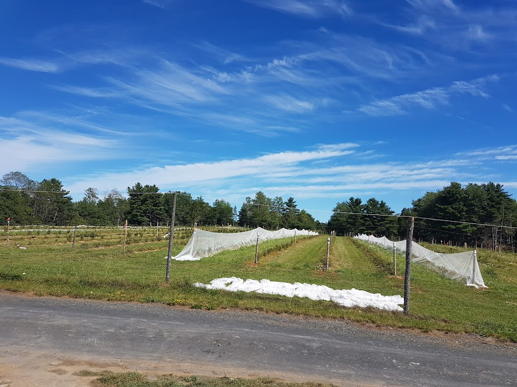 South Shore Farms | point of interest | 3228 Upper Branch Rd, Upper Branch, NS B4V 4X3, Canada | 9025439602 OR +1 902-543-9602