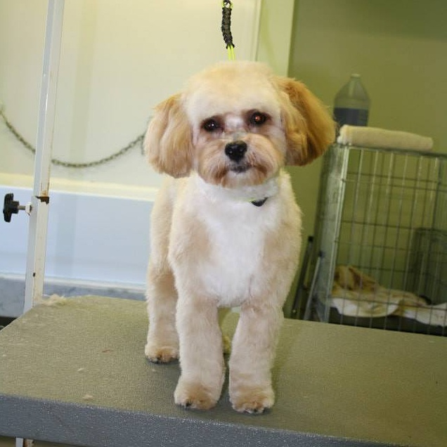 The Spaw Grooming Salon | point of interest | 20797 Winston Churchill Blvd, Caledon, ON L7K 1J8, Canada | 5199429210 OR +1 519-942-9210