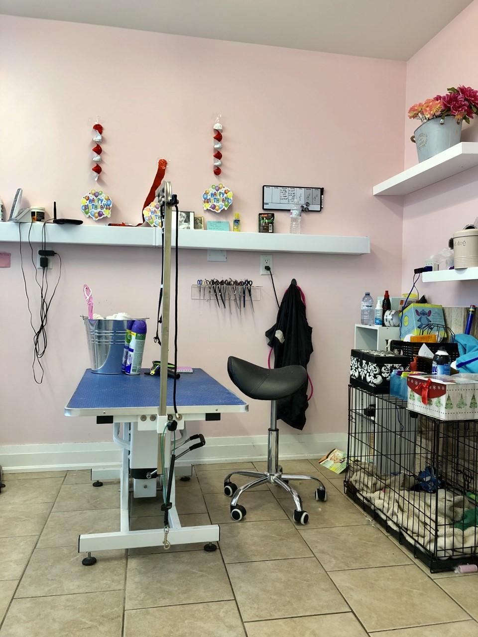 Bright Pets | pet store | 15 Chapel St, Bolton, ON L7E 1C2, Canada | 9059516572 OR +1 905-951-6572