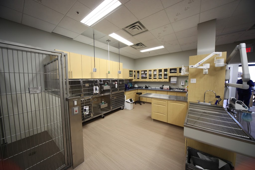 Currents Veterinary Centre | veterinary care | 5138 Windermere Blvd, Edmonton, AB T6W 0L9, Canada | 7804390126 OR +1 780-439-0126