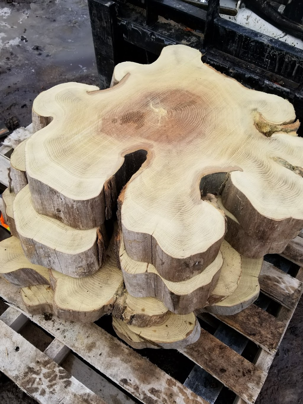Sawmill Sid | point of interest | 1352 Lakeshore Rd E, Mississauga, ON L5E 1E9, Canada | 9059900095 OR +1 905-990-0095
