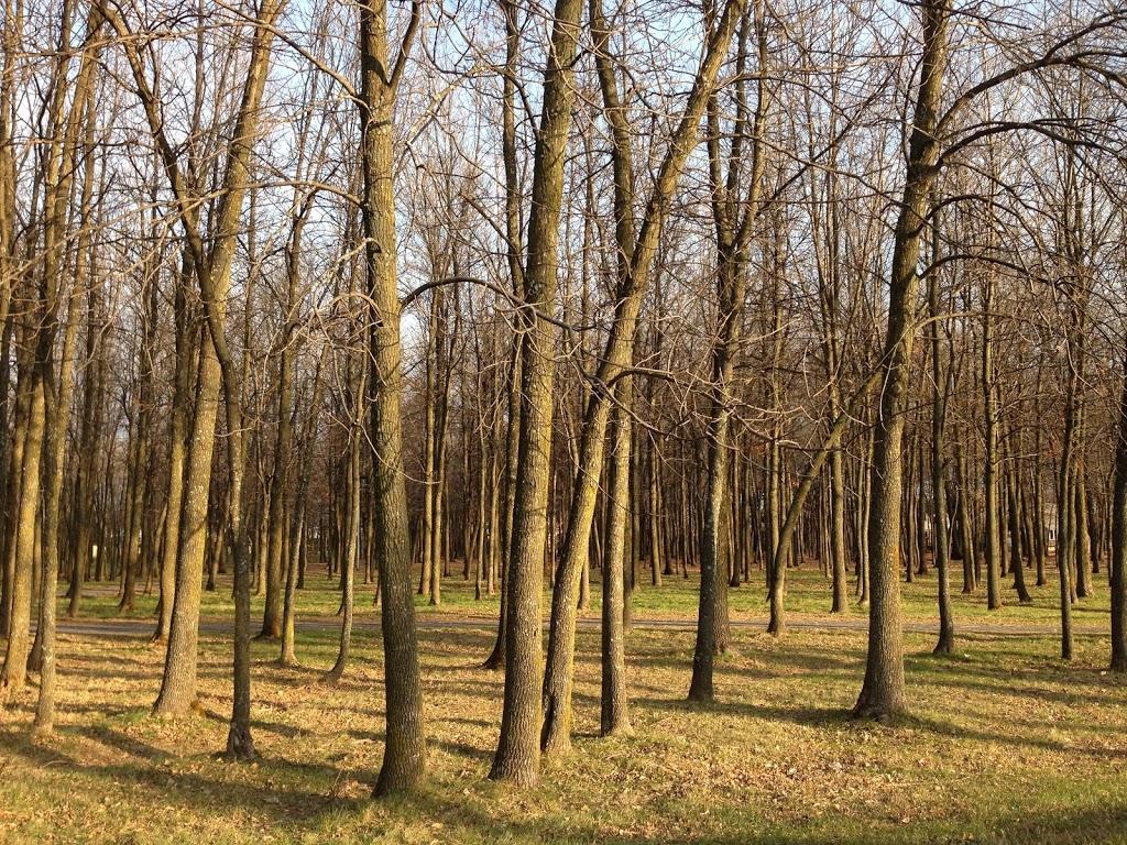 Parc Belcourt | park | Rue Belcourt, Longueuil, QC J4M 2L2, Canada | 4504637311 OR +1 450-463-7311