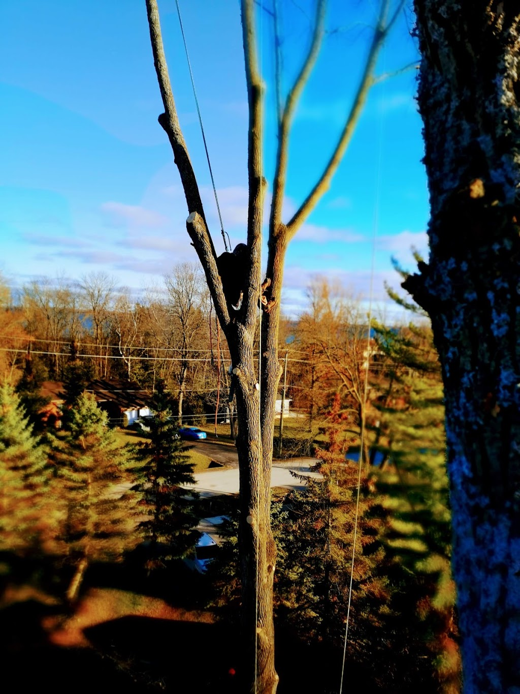 The Great Canadian Tree Service | real estate agency | 37 Peel St, Barrie, ON L4M 3L1, Canada | 7057348733 OR +1 705-734-8733