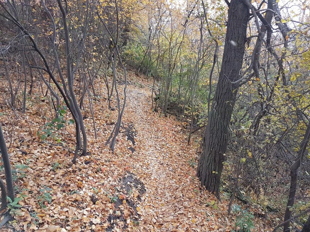 Rochdale Park | park | 402 Redberry Rd, Saskatoon, SK S7K 4Y9, Canada | 3069753300 OR +1 306-975-3300