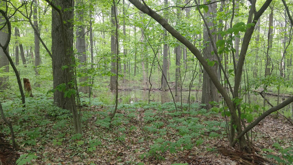 Kopegaron Woods Conservation Area | park | Talbot Rd, Leamington, ON N0P 2P0, Canada | 5197765209351 OR +1 519-776-5209 ext. 351