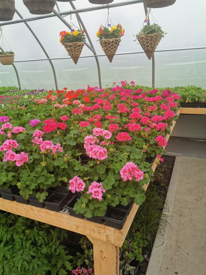 Vista Greenhouse | point of interest | 4693 Powell Rd, Wallenstein, ON N0B 2S0, Canada | 5196980550 OR +1 519-698-0550