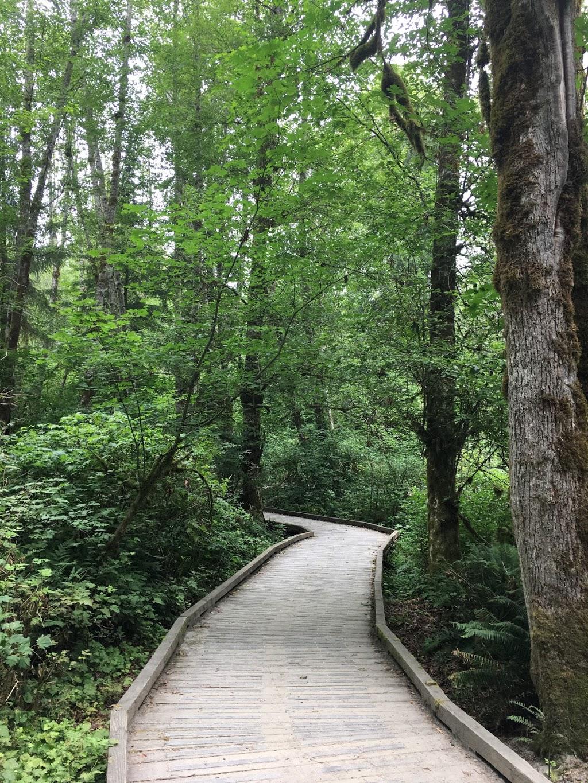 Birch Grove Hatchery Trail | park | Birch Grove Hatchery Trail, Surrey, BC V4N 2E2, Canada