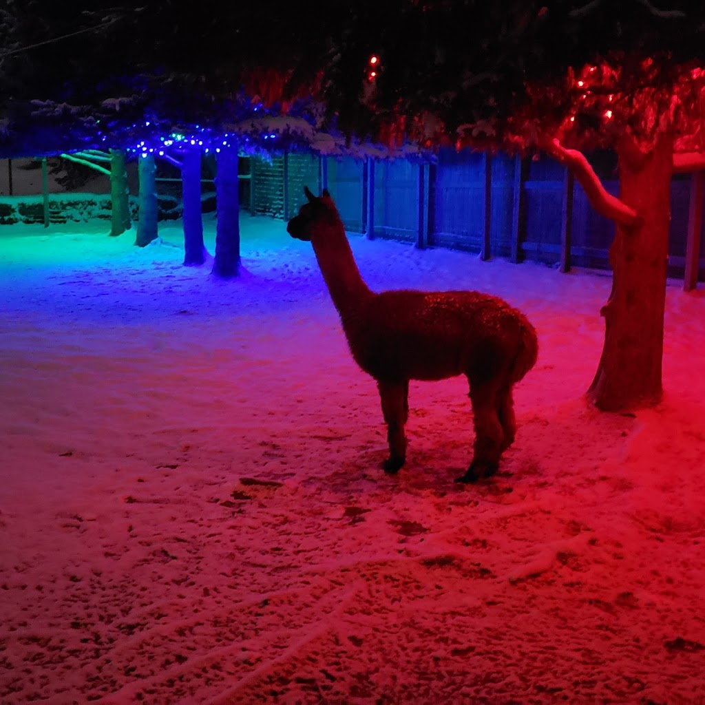 South West Alpacas | point of interest | 24 King St N, Scotland, ON N0E 1R0, Canada | 8888308688 OR +1 888-830-8688
