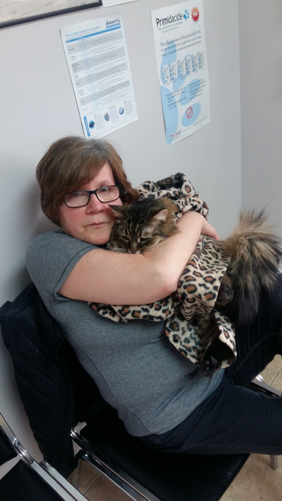 Bruce Street Animal Hospital | veterinary care | 37 Bruce St, Kitchener, ON N2B 1Y4, Canada | 5199544522 OR +1 519-954-4522