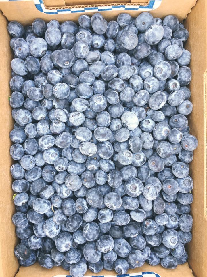 Madalea Growers Blueberry Farm   point of interest   233 Riverside Rd, Mara, BC V0E 2K0, Canada   2505177454 OR +1 250-517-7454