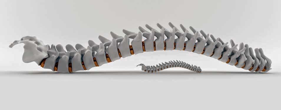 Main Chiropractic | health | 186 Main St, Ottawa, ON K1S 1C2, Canada | 6135659995 OR +1 613-565-9995