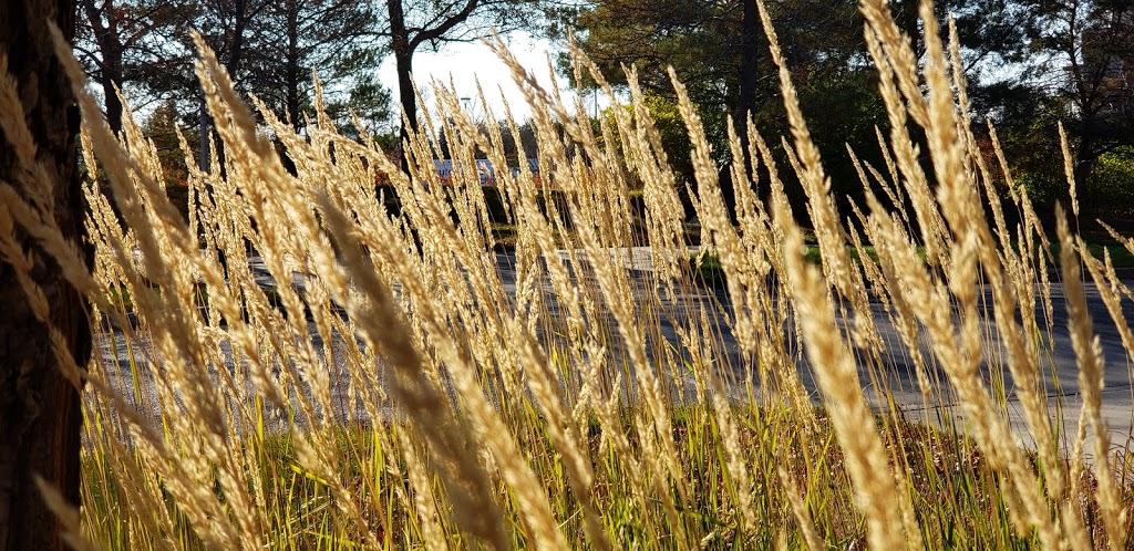 Boffin Gardens | park | 109 Research Dr, Saskatoon, SK S7N 3R3, Canada | 3062707554 OR +1 306-270-7554
