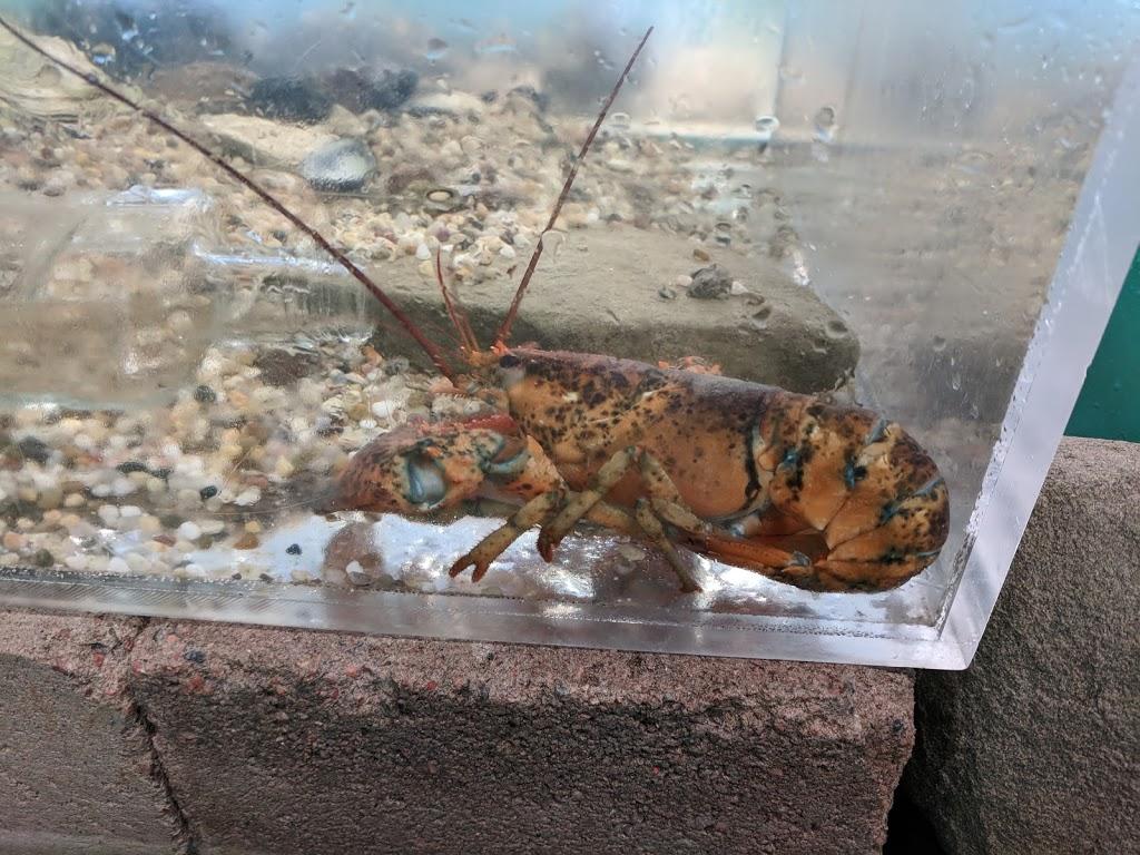 Ecocentre Homarus Ecocentre | aquarium | 46 Pointe-du-Chêne Wharf Rd, Pointe-du-Chêne, NB E4P 4V8, Canada | 5068789315 OR +1 506-878-9315