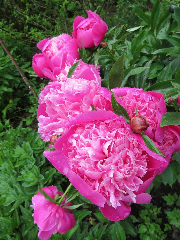 English Country Garden | park | 1401 Rockland Ave, Victoria, BC V8S 1V9, Canada