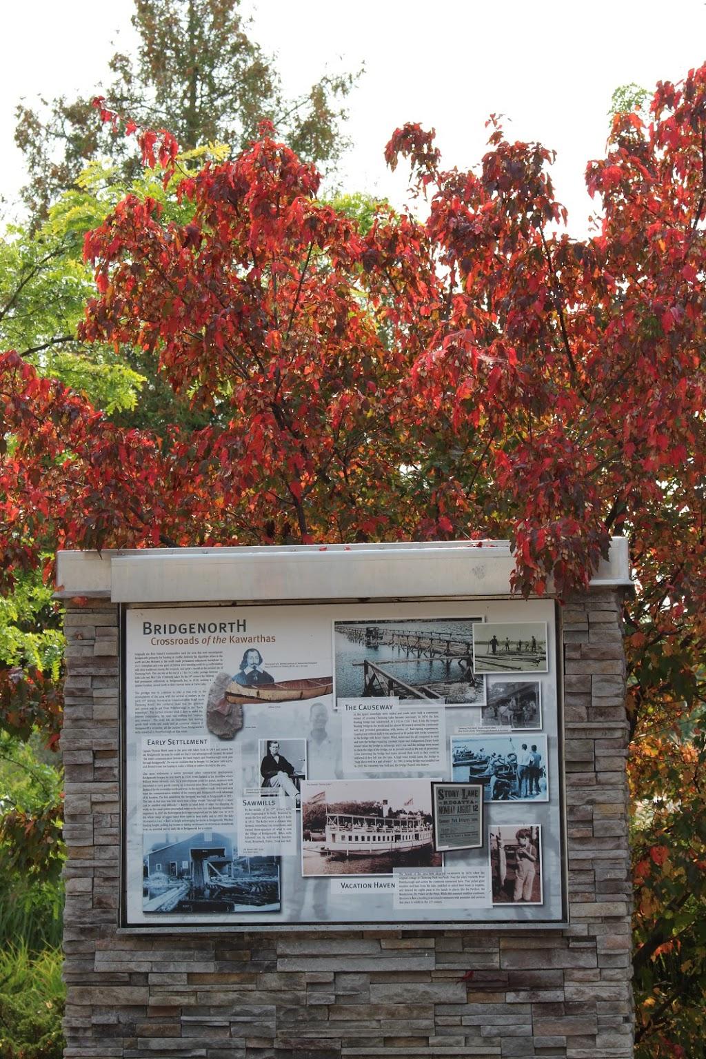 Selwyn Public Library | library | 836 Charles St, Bridgenorth, ON K0L 1H0, Canada | 7052925065 OR +1 705-292-5065