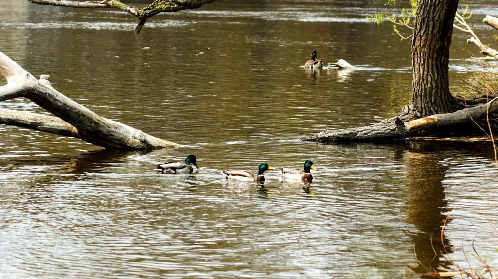 Riverain Park | park | 400 N River Rd, Ottawa, ON K1K 3Y8, Canada | 6135802400 OR +1 613-580-2400