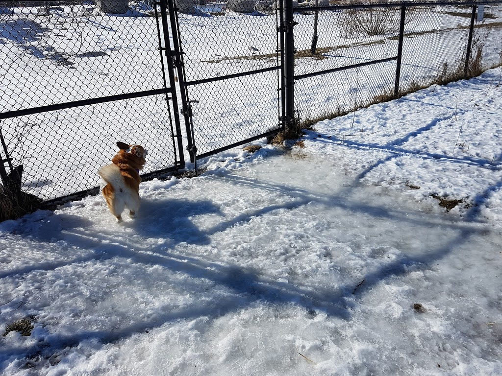 McLennan Park Gated Dog Park | park | 1T4,, McLennan Park Gate, Kitchener, ON N2E 1T4, Canada