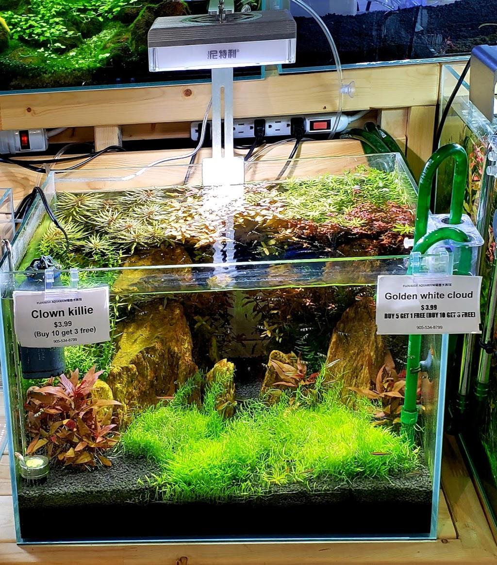 Flourish Aquarium | pet store | 9255 Woodbine Ave Unit B-7B, Markham, ON L6C 1Y9, Canada | 9055348799 OR +1 905-534-8799