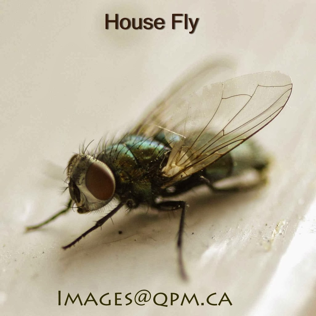 Quest Pest Management Inc. | home goods store | 639 Dupont St, Toronto, ON M6G 1Z4, Canada | 4163215060 OR +1 416-321-5060