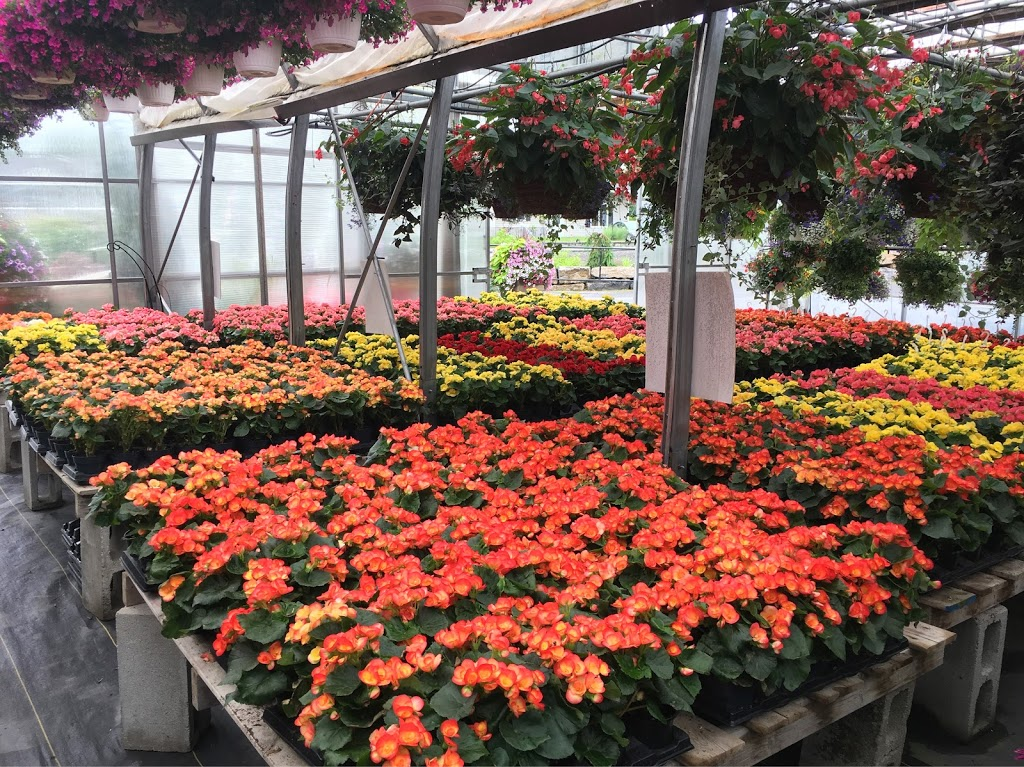 Les Serres Robert Plante Greenhouses   store   4228 Navan Rd, Navan, ON K4B 1H9, Canada   6138359266 OR +1 613-835-9266