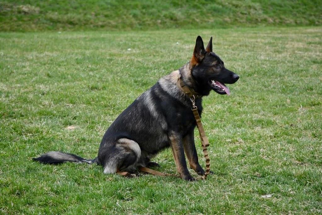 Tigerhillk9 German Shepherds Breeder   point of interest   13366 10 Side Rd, Georgetown, ON L7G 4S5, Canada   6479756892 OR +1 647-975-6892