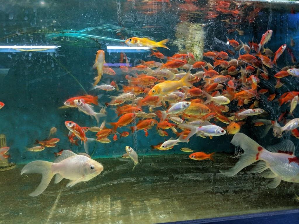 Fish Gallery | pet store | 959 Main St, Winnipeg, MB R2W 3P2, Canada | 2049448303 OR +1 204-944-8303