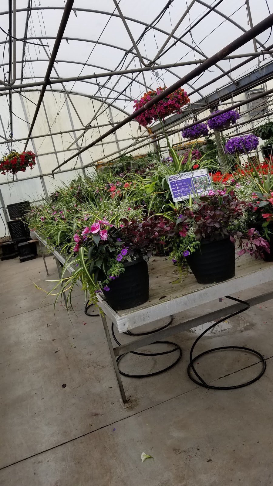 Annas Garden Home & Wellness | florist | 1911 Seacliff Dr, Kingsville, ON N9Y 2N3, Canada | 5193263409 OR +1 519-326-3409