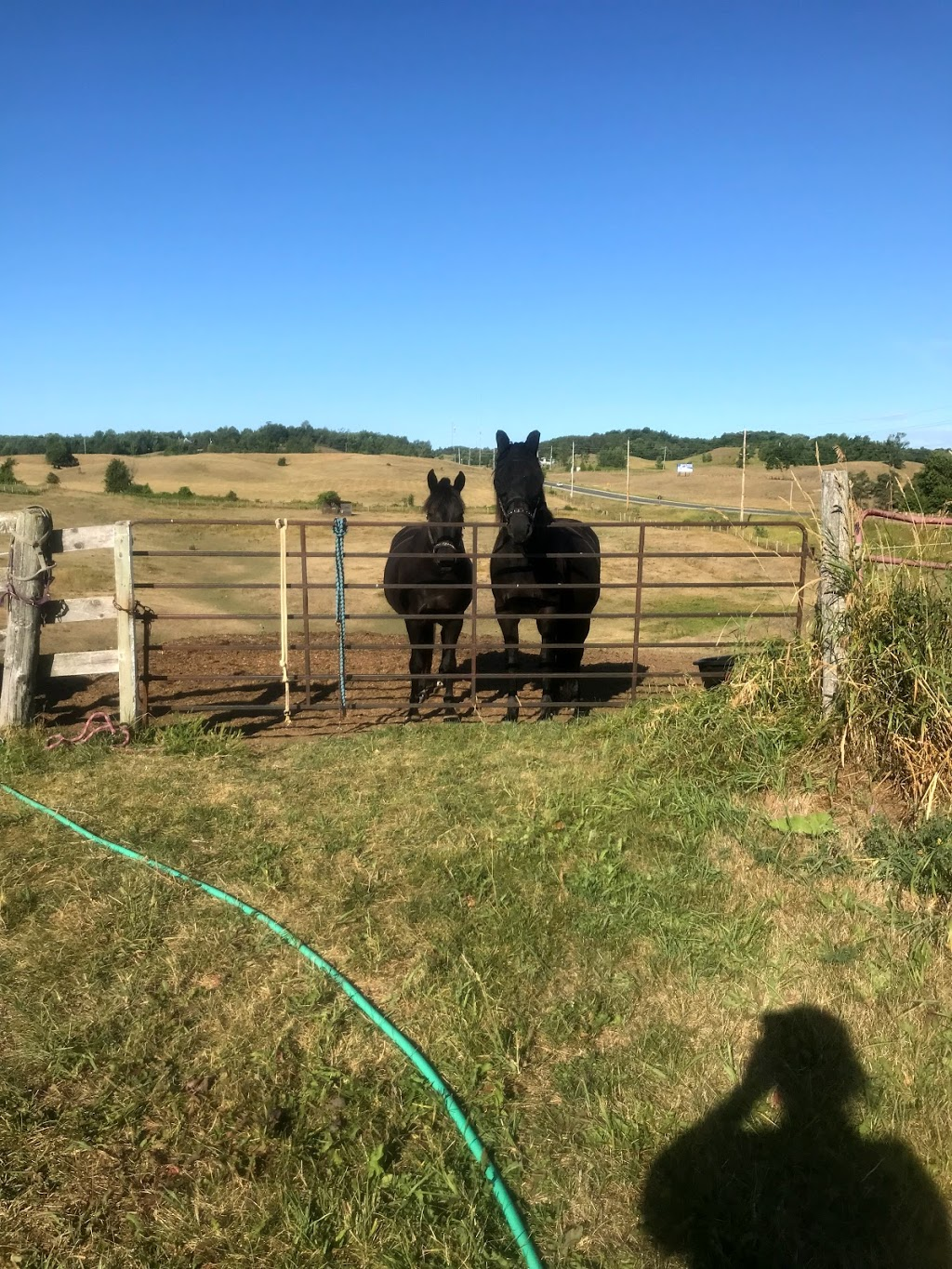 Dark Horse Acres equestrian farm | point of interest | 507212 ON-89, Mono, ON L9V 1J2, Canada | 9057167627 OR +1 905-716-7627