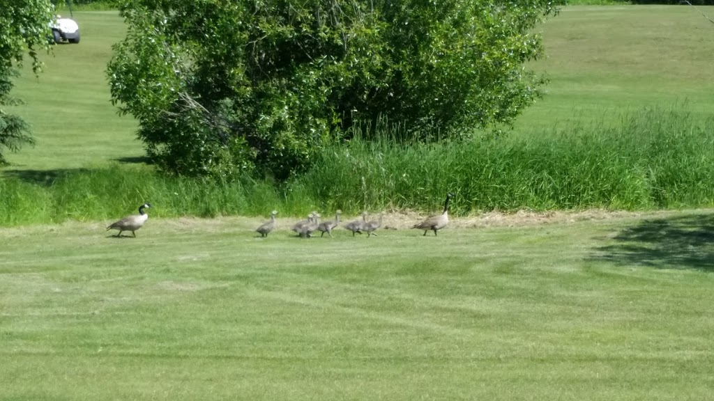 Northern Ridge Golf Course | point of interest | NW 3-19-63 W4, Newbrook, AB T0A 2P0, Canada | 7805763939 OR +1 780-576-3939