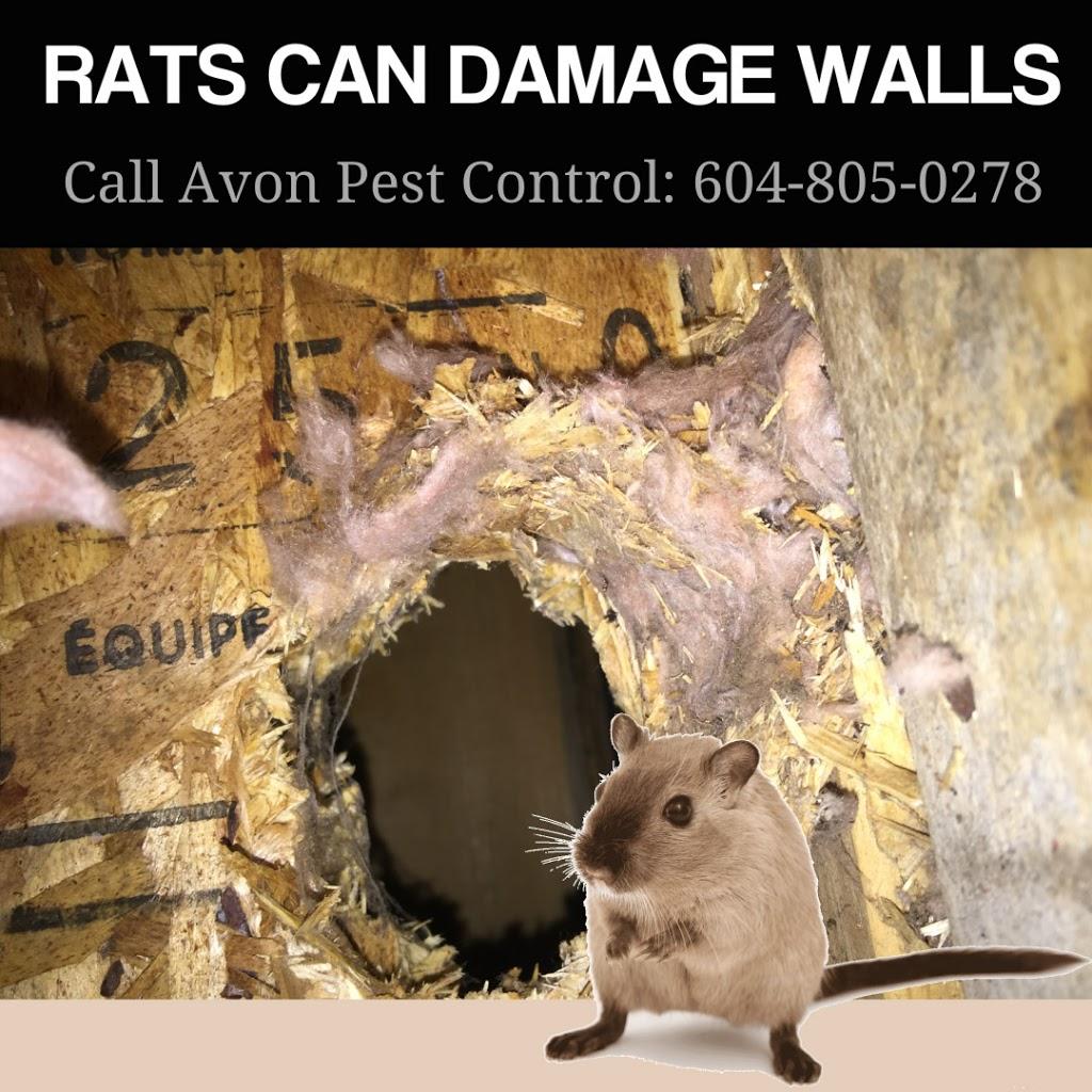 Avon Pest Control Surrey-Delta | home goods store | 37-6366 126 St, Surrey, BC V3X 1T9, Canada | 6042391615 OR +1 604-239-1615