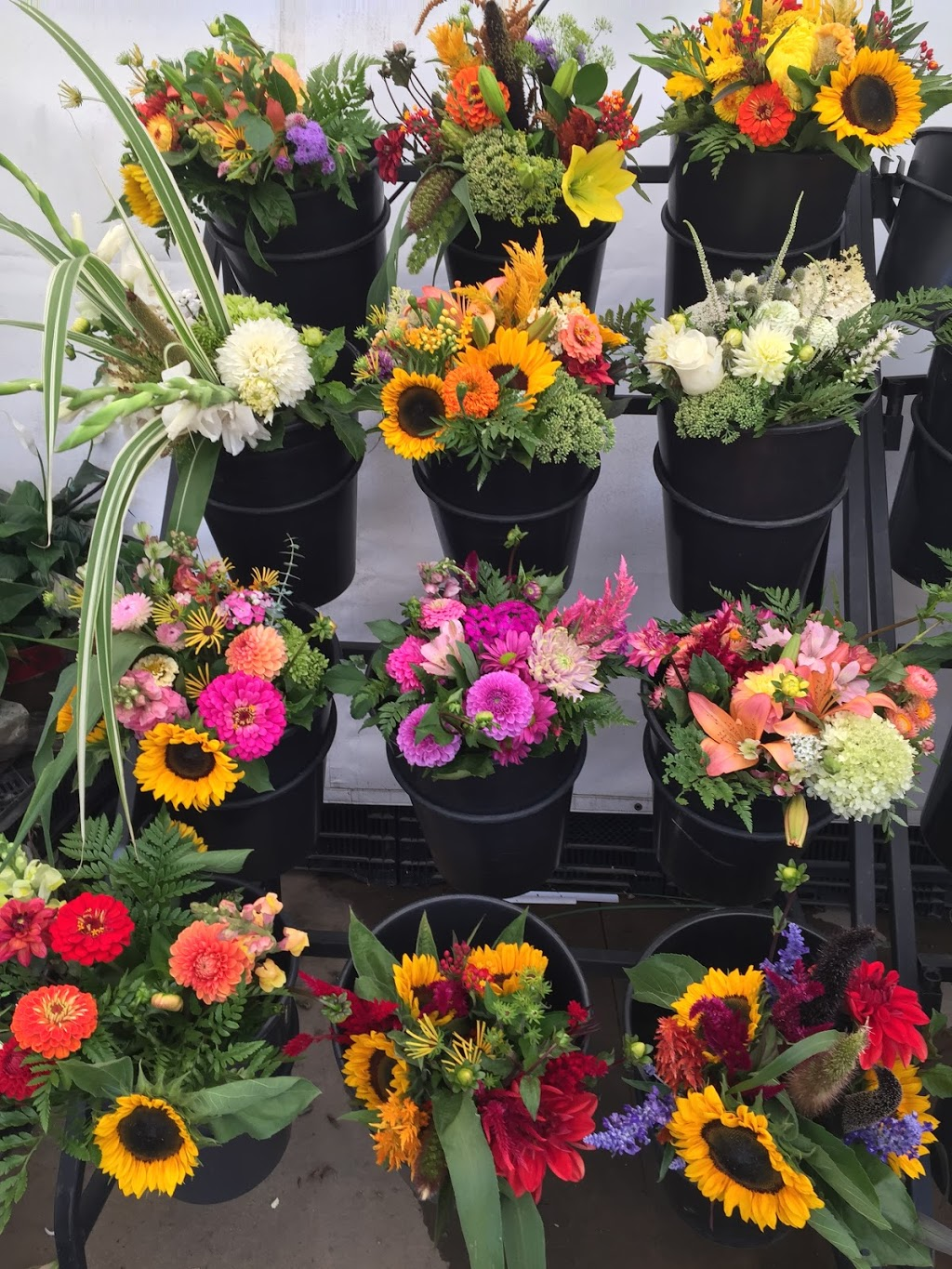 The Flower Lady and Gent   florist   7440 Pack Rd, London, ON N6P 1M1, Canada   5196149880 OR +1 519-614-9880