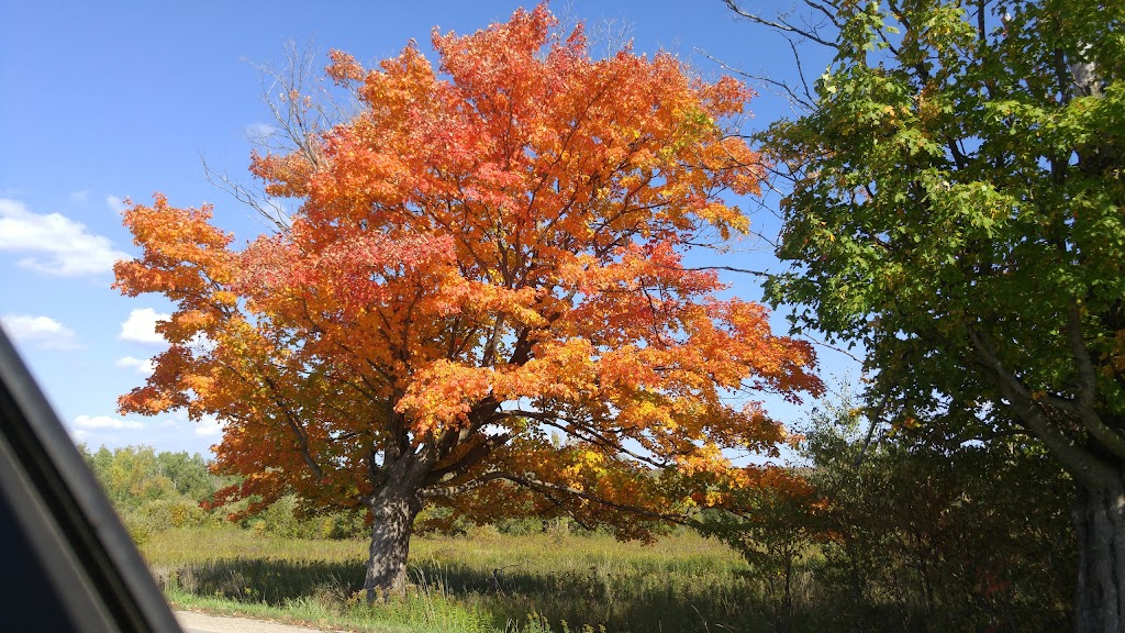 Amaranth Springs Farm | point of interest | 554090 Mono Amaranth Townline, Orangeville, ON L9W 2Z1, Canada | 5199424716 OR +1 519-942-4716