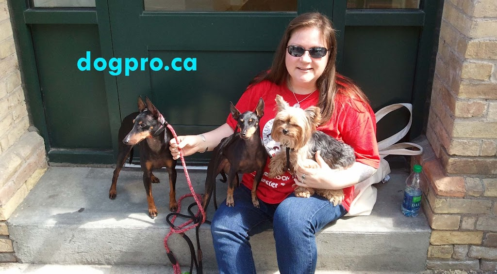 dogpro.ca   point of interest   3208 Barronsfield Rd, River Hebert, NS B0L 1G0, Canada   9026676853 OR +1 902-667-6853