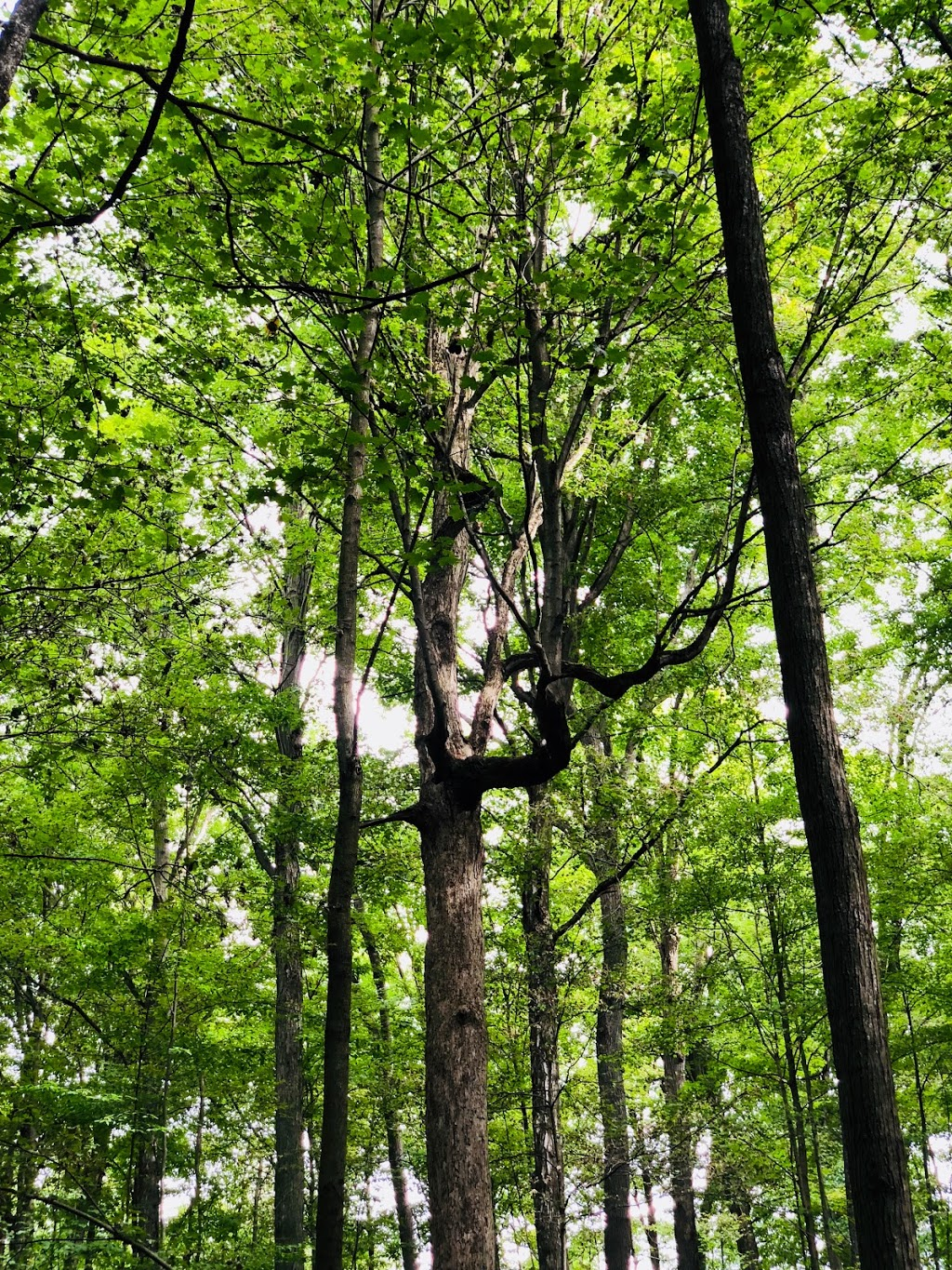 Dryden Tract Trail   park   1865 Alps Rd, Cambridge, ON N1R 5S5, Canada