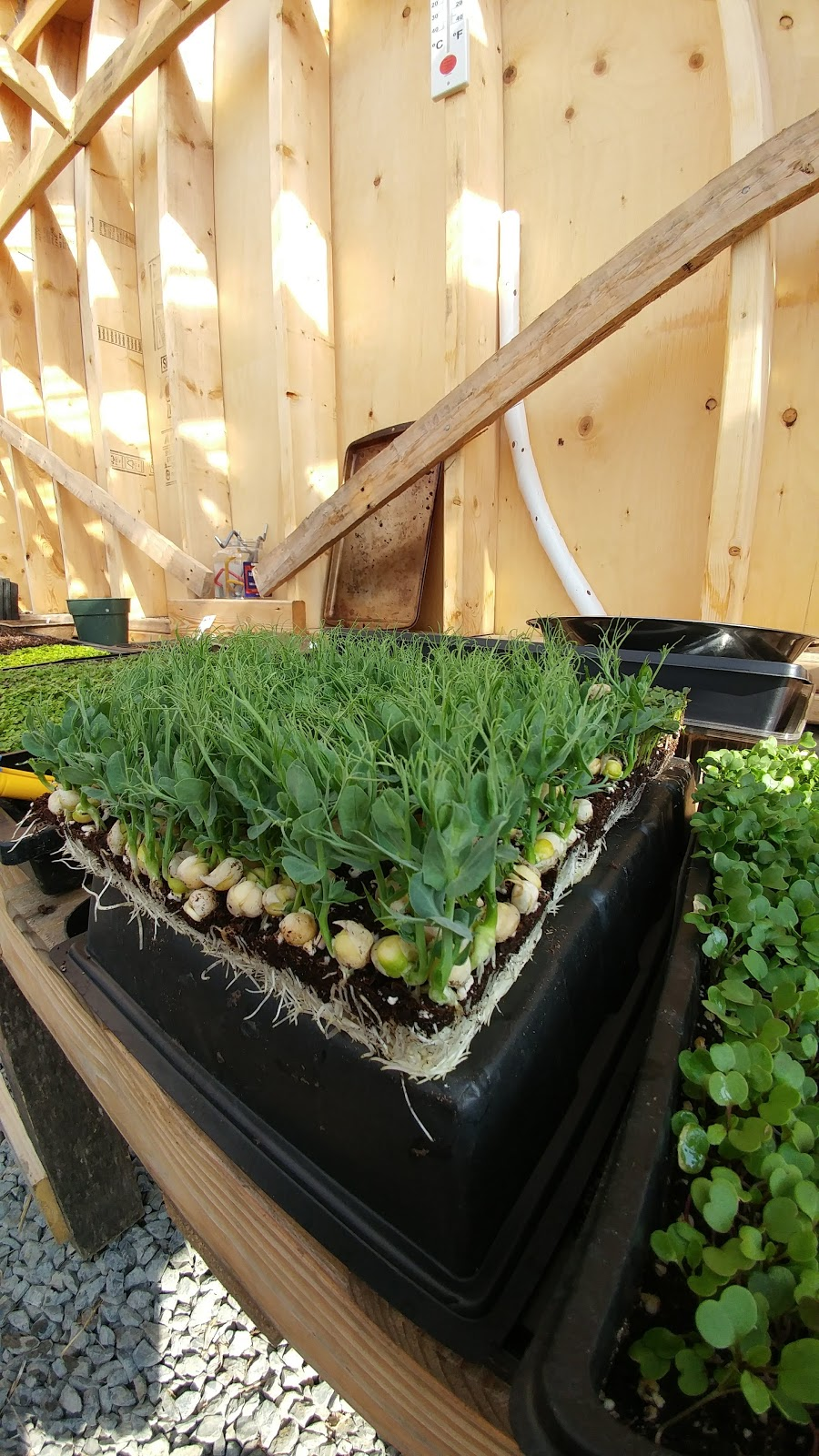 Edible Forest Farm | store | 3410 Greenfield Rd, South Frontenac, ON K0H, Canada