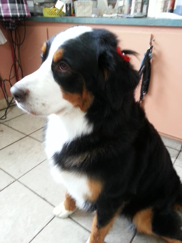 Chenil la fierté canine | store | 86 rang st henri, Lanoraie, QC J0K 1E0, Canada | 4503652172 OR +1 450-365-2172