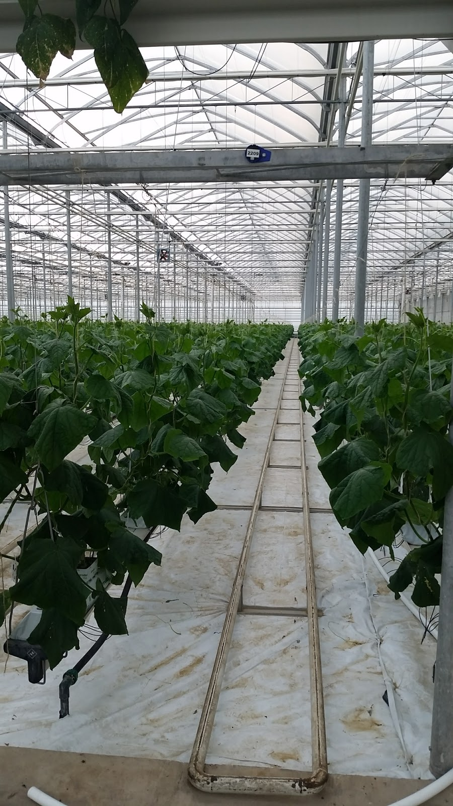 Beverly Greenhouses Ltd | point of interest | 1247 Concession 4 W, Waterdown, ON L8B 1K2, Canada | 9056282503 OR +1 905-628-2503