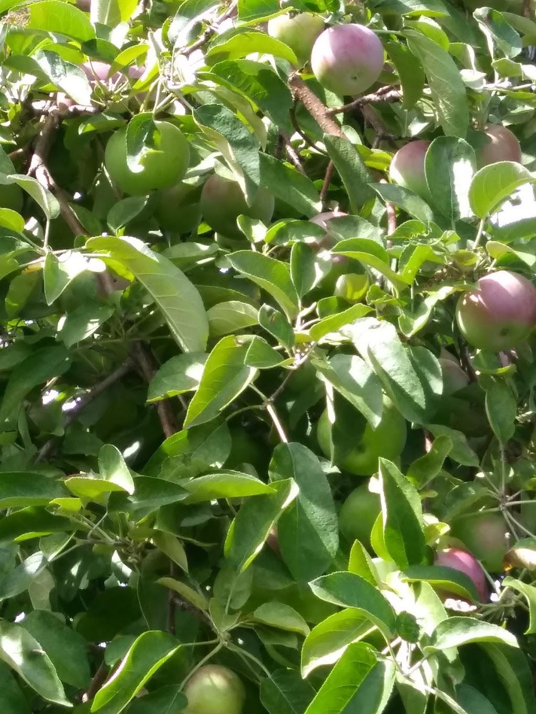 La ferme d'Orléans – Orleans Fruit Farm Ltd | store | 1399 St Joseph Blvd, Orléans, ON K1C 7K9, Canada | 6138301303 OR +1 613-830-1303