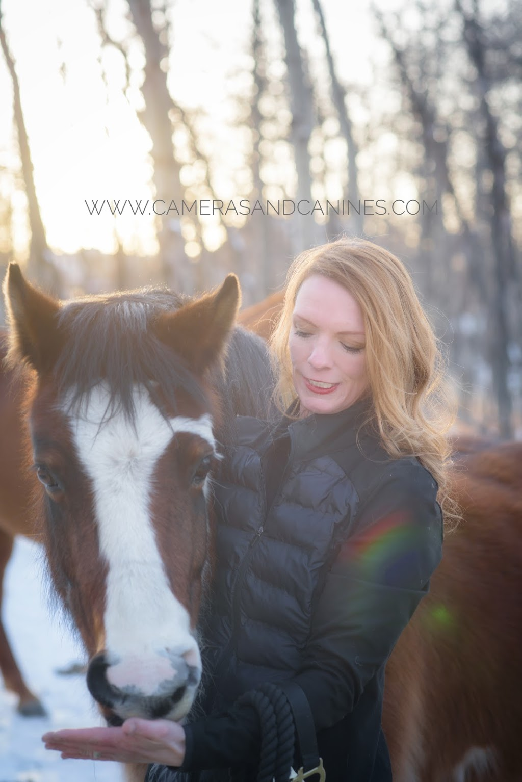 OConnor Equine | travel agency | 31043 Woodland Close, Calgary, AB T3R 1G5, Canada | 4036040708 OR +1 403-604-0708