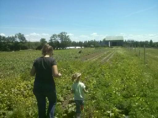 Twin Creeks Farm   point of interest   205045 ON-26, Owen Sound, ON N4K 5W4, Canada   5195384704 OR +1 519-538-4704