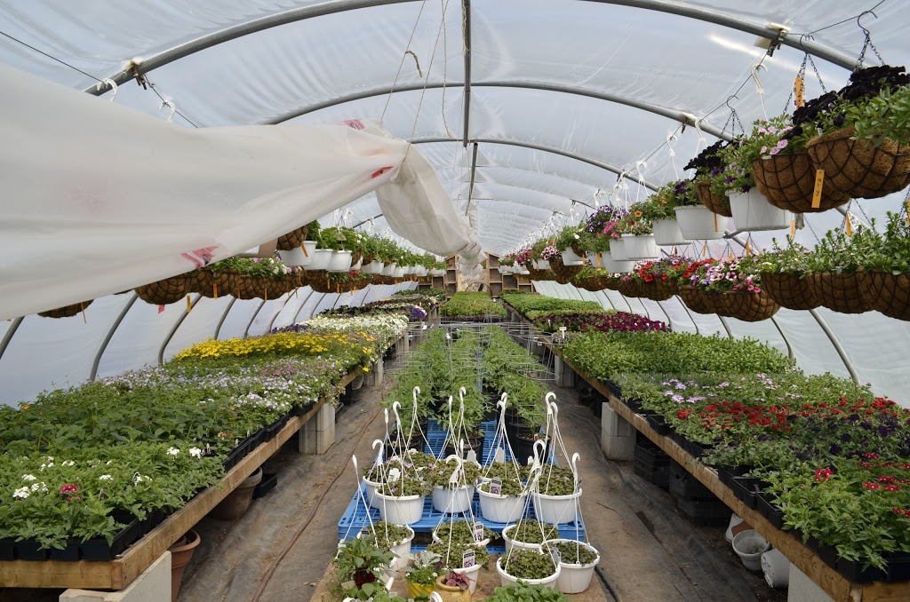 10 and 10 Garden Centre | store | 634026 ON-10 Building B, Mono, ON L9W 5P4, Canada | 6472299400 OR +1 647-229-9400